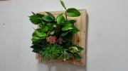 에코월 편백나무원목 식물액자(EP081W)